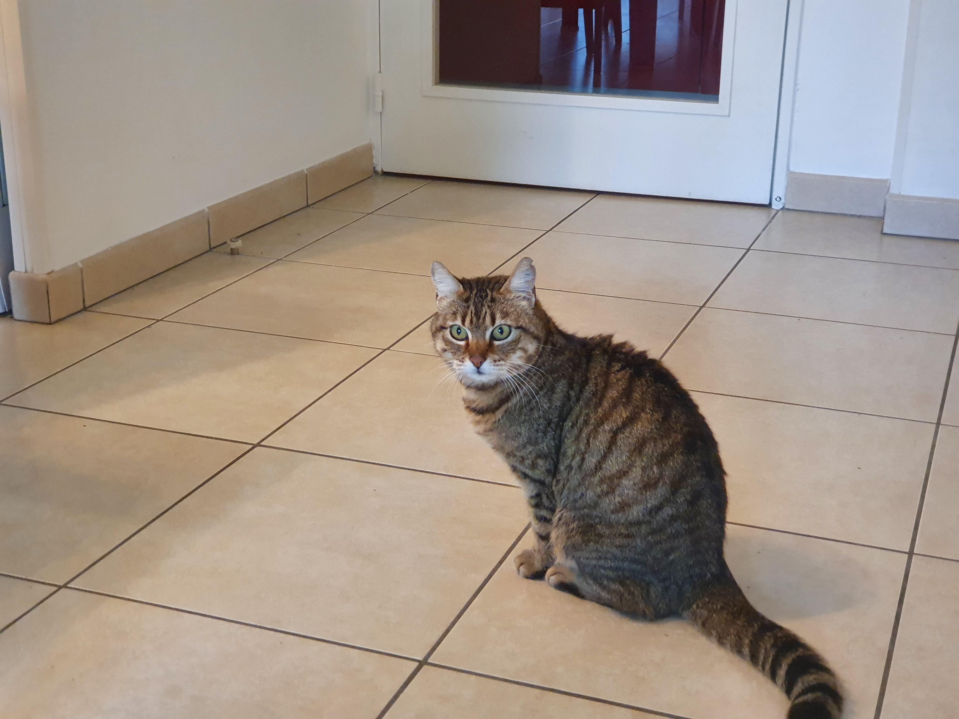 Beautiful cat again